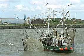 3055 02 jpgfischerei garnelenfang auf der nordsee vor der küste der